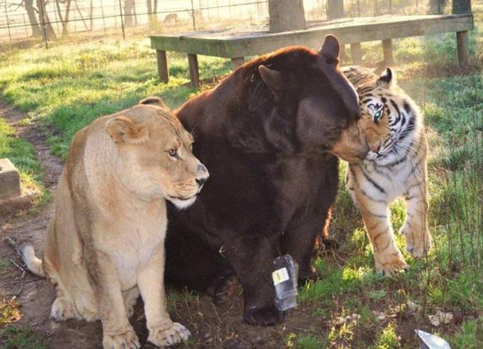 дружба животных фото 2 (700x506, 162Kb)