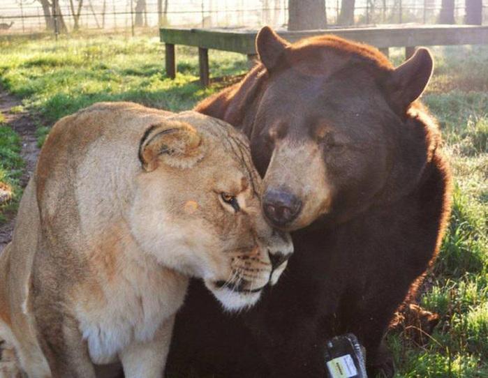 дружба животных фото 3 (700x542, 150Kb)