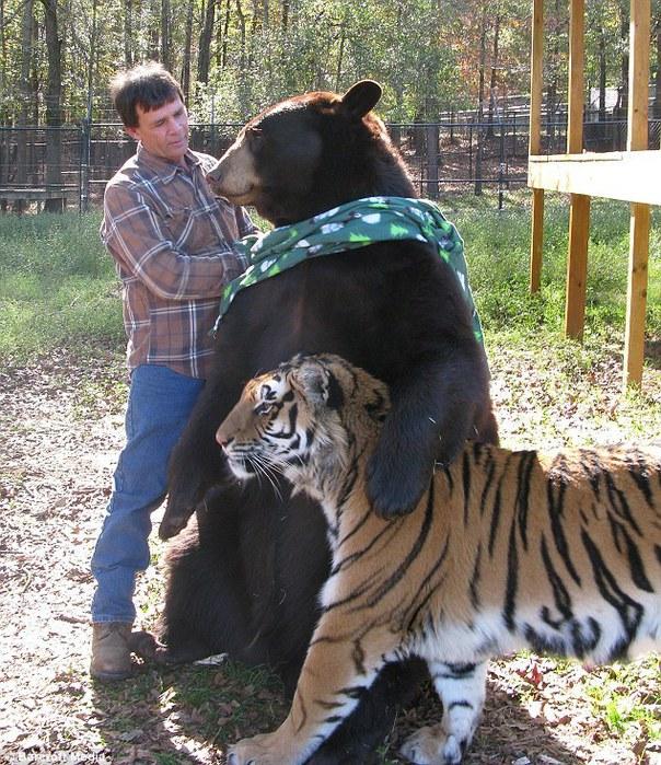 дружба животных фото 5 (604x700, 178Kb)