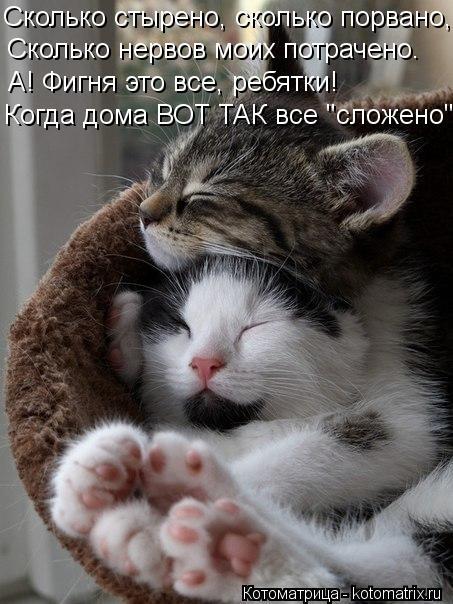 kotomatritsa_5a (453x604, 61Kb)