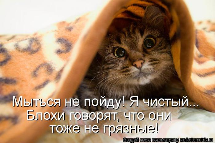 kotomatritsa_S (700x466, 51Kb)