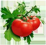 tomatoes (150x148, 41Kb)