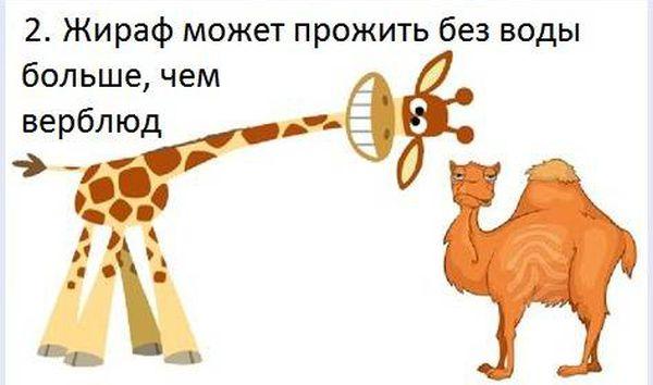 fakt_020 (600x354, 30Kb)