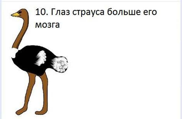 fakt_100 (600x392, 17Kb)