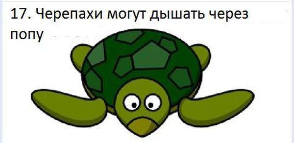 fakt_170 (600x292, 22Kb)