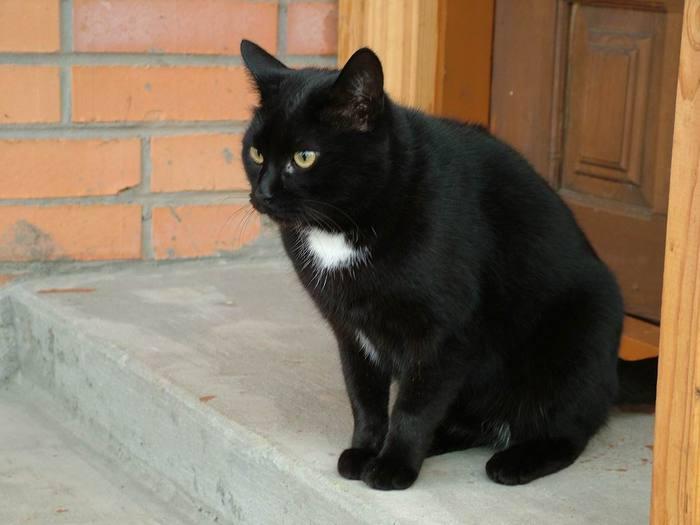 черный кот (700x525, 32Kb)
