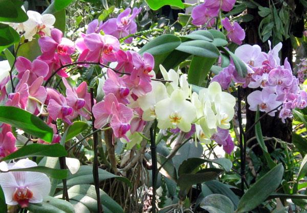 4276504_orchidea_07 (600x417, 91Kb)