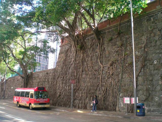 деревья на стенах гонконга фото (640x481, 112Kb)