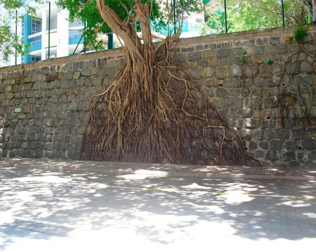 деревья на стенах гонконга фото 1 (640x512, 106Kb)