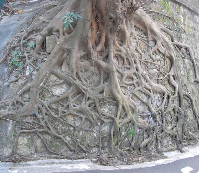 деревья на стенах гонконга фото 3 (640x558, 106Kb)