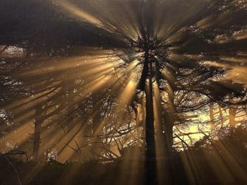 ozarenie-svetom-[1600x1200]-[29449176] (350x263, 53Kb)