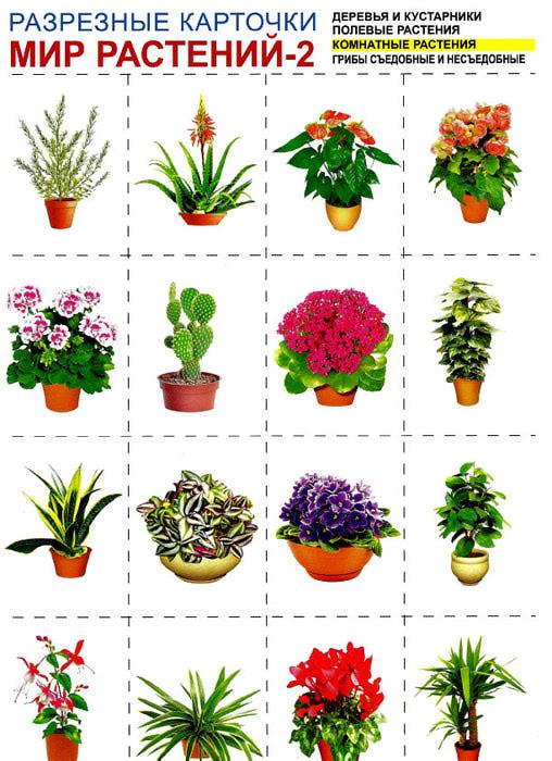 цветок комнатный схема растения