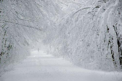 Коммунальщики: это рекордно снежная зима за последние 100 лет