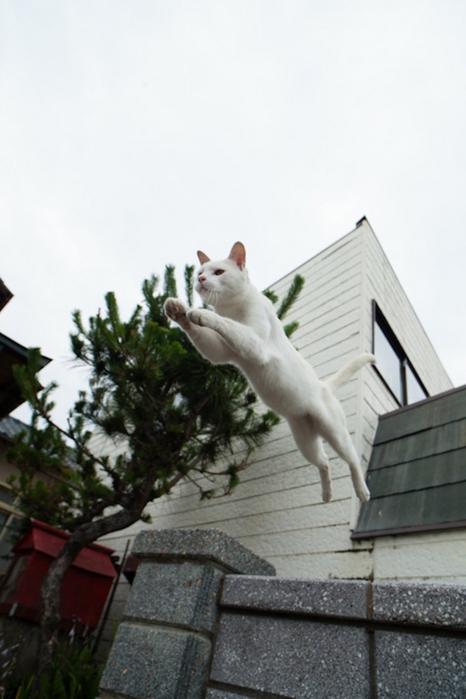Cat's Paradise on the Japanese islandКошачий рай на японском
