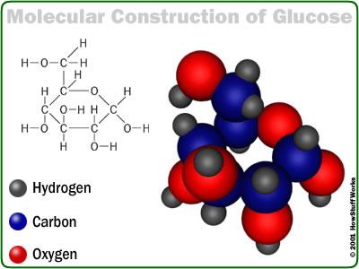 glu (400x300, 24Kb)
