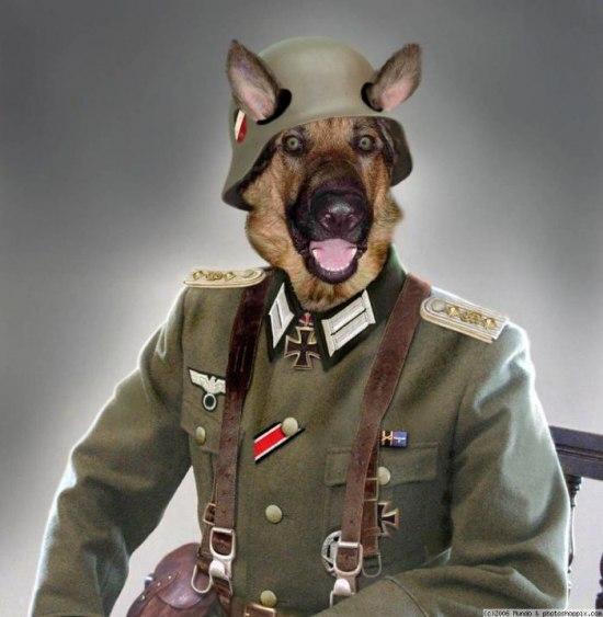 немец пес (550x563, 51Kb)