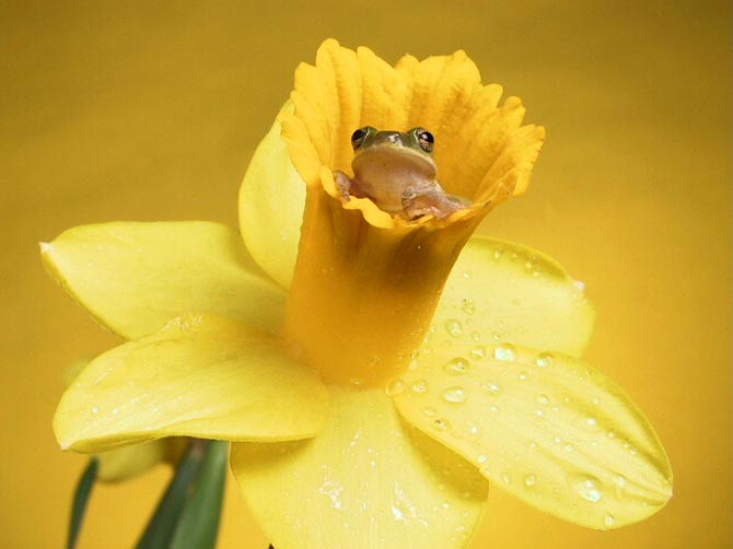 85578959_animals_flowers__8_ ( 604x403, 28Kb)