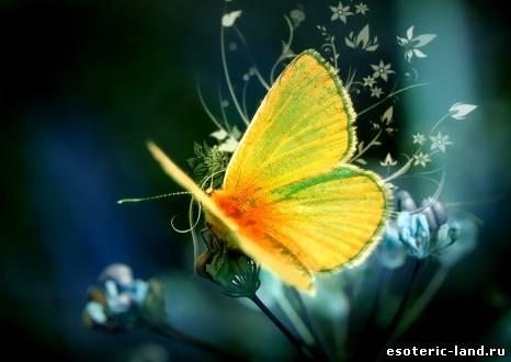 притча о бабочке (466x330, 19Kb)