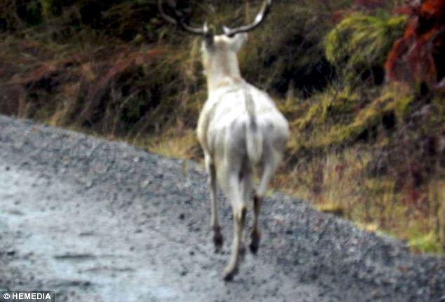 deer-001 (634x431, 41Kb)