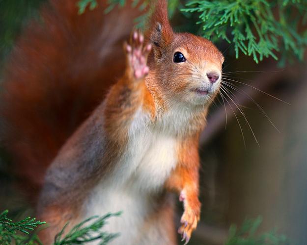 смешные животные фото (625x500, 200Kb)