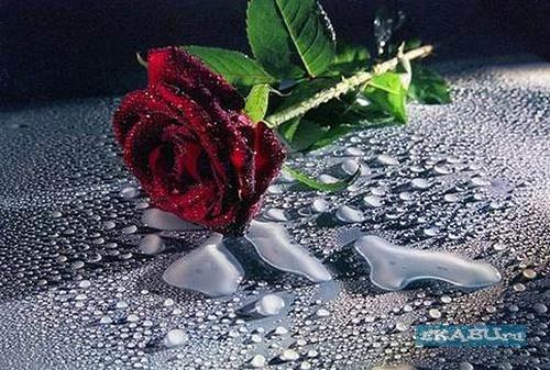 1227014087_059_love (500x337, 68Kb)