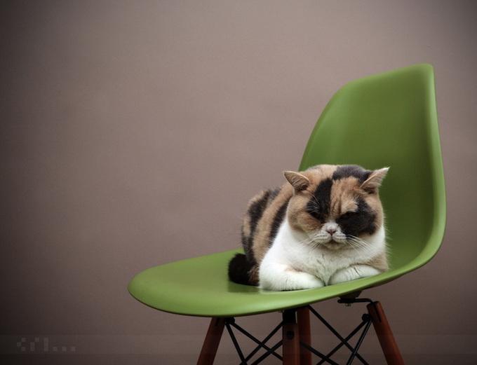 прикольные фото кошек (680x521, 71Kb)