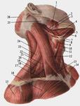 Первое упражнение нужно для тренировки передней части шеи- сгибание.  Иначе говоря, это самый обыкновенный кивок...
