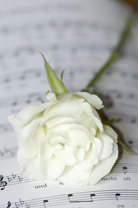 """Musical Instruments, notes and flowers Музыкальные инструменты (рояль, пианино, скрипка, саксофон, гитара), ноты и цветы """" Терри"""