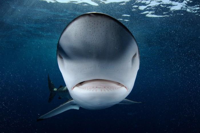Акулий промысел фото 8 (700x465, 71Kb)