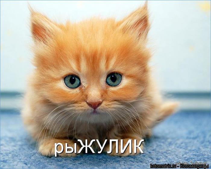 kotomatritsa_w_ (700x560, 53Kb)