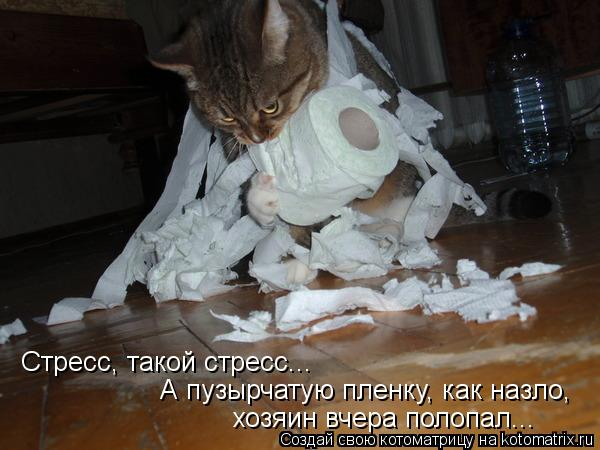 kotomatritsa_bw (600x450, 44Kb)