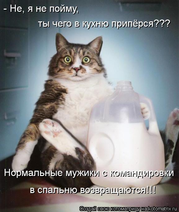 kotomatritsa_Ca (577x683, 51Kb)