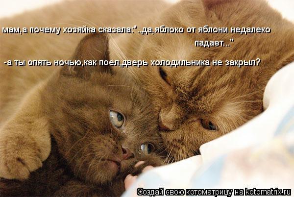 kotomatritsa_FH (600x402, 49Kb)
