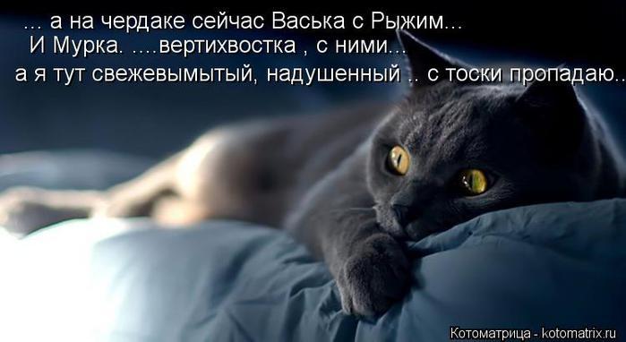 kotomatritsa_Jl (700x382, 33Kb)