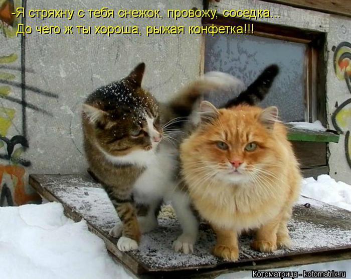 kotomatritsa_JY (700x555, 68Kb)