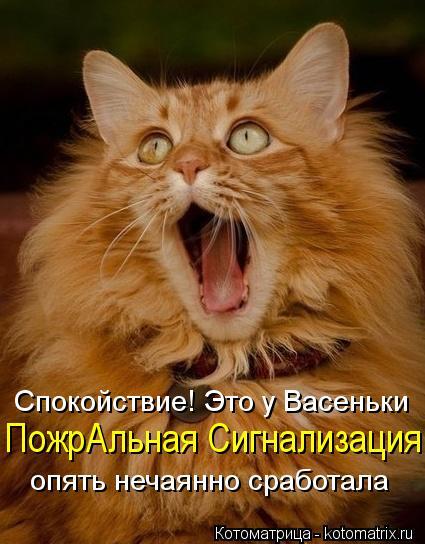 kotomatritsa_vZ (425x544, 46Kb)