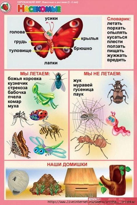 4979214_kartoshki_dla_obusheniya11_1_ (469x700, 217Kb)