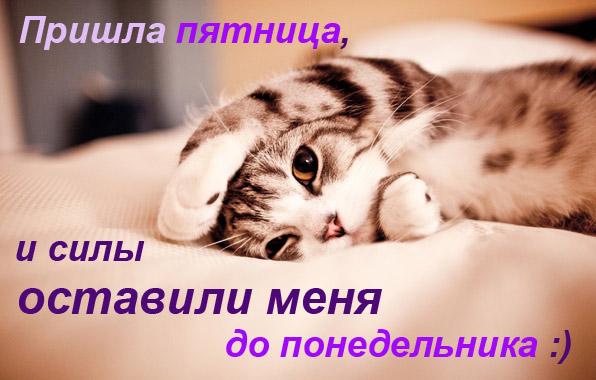 котэ/4348076_kot (596x380, 68Kb)
