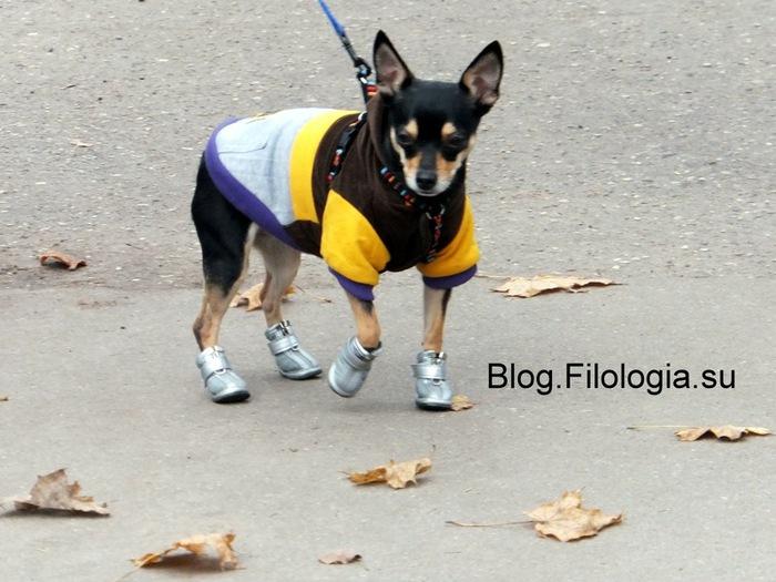 Маленькая собачка на прогулке/3241858_autumn12e (700x525, 111Kb)