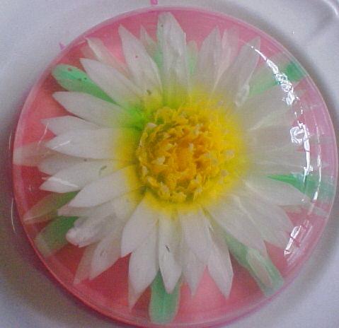 3D цветы в желе/1354838719_580c114f84ff (479x464, 40Kb)