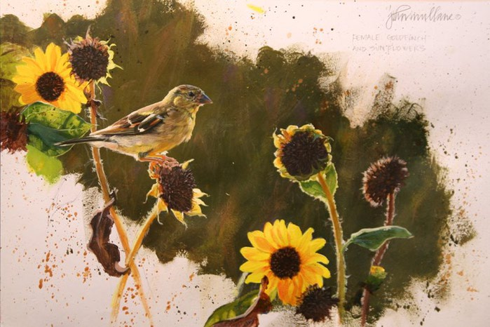 Female Goldfinch Study Blog (700x466, 83Kb)