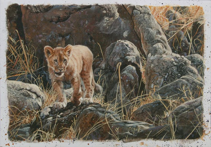 Lion Cub Study Blog (700x490, 115Kb)