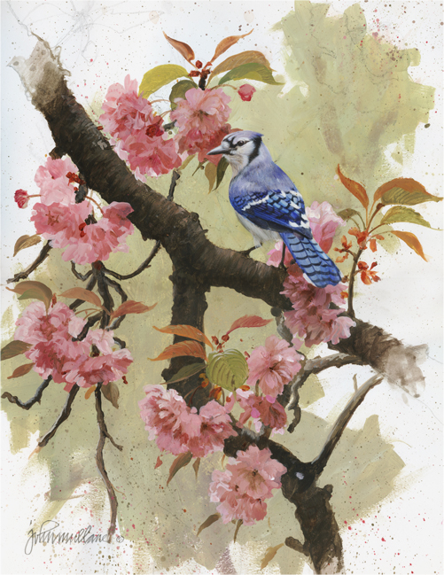 Bluejay and Blossoms Blog (501x649, 376Kb)