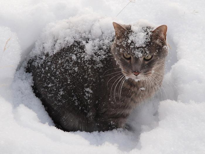 73516795_cats_dra_0309__5_ ( 640x513, 95Kb)