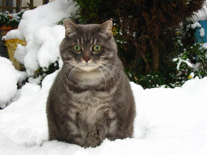 cat-and-neko-moe-063 (640x513 , 99Kb)