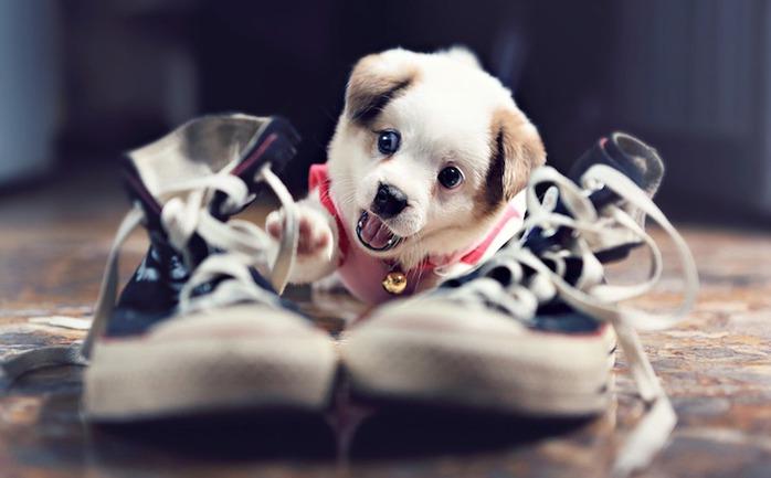 смешной щенок фото (700x433, 57Kb)
