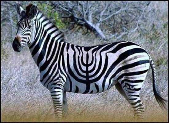 happy-hanukkah-from-zebra-detox-L-sK63Sm (550x401, 50Kb)
