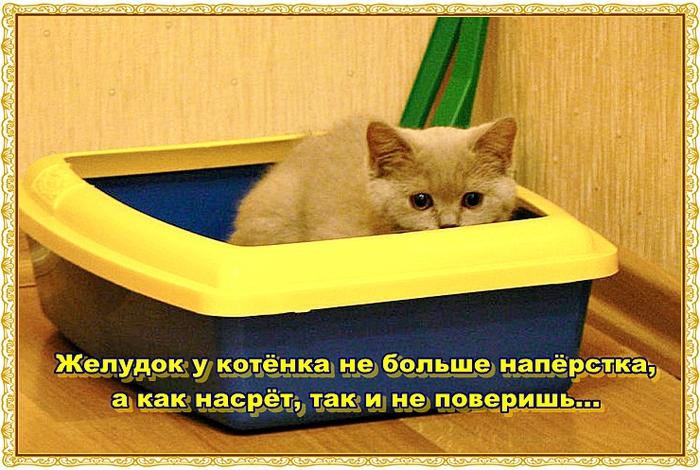 Ashampoo_Snap_2012.12.09_09h37m05s_002_ (700x470, 304Kb)