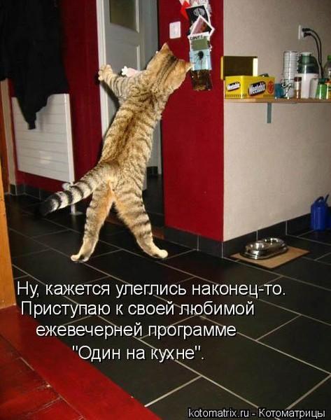 Кот на кухне (473x600, 75Kb)