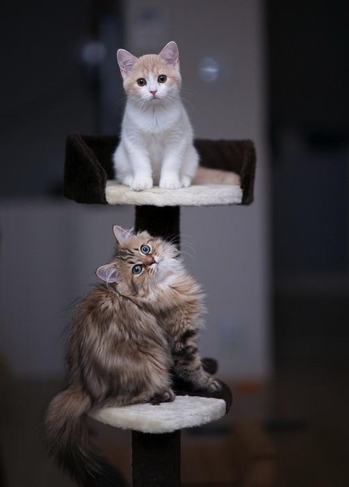 смешные котята фото (502x700, 57Kb)